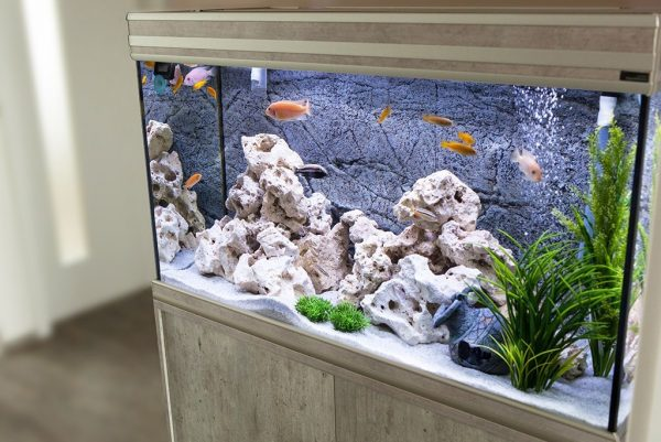 a well decorated fish tank in a living room